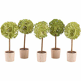 Almond Tree, Set of Five - 5 cm / 2 inch