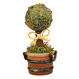 Set of Three- Miniature Boxwood - 6 cm / 2,5 inch
